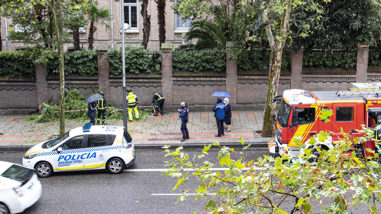 Los bomberos retiran una rama caída por el viento en el Paseo General Martínez Campos de Madrid