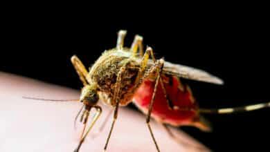 La 'app' para luchar contra epidemias de dengue y del virus del Nilo