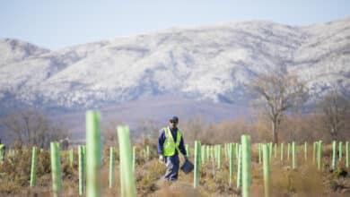 Repsol impulsa la reforestación en la Península Ibérica y Latinoamérica