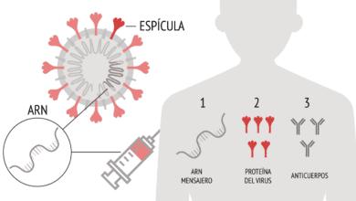 Así funciona la vacuna de Pfizer contra el Covid