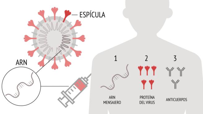 Así funciona la vacuna de Pfizer contra el Covid - El Independiente