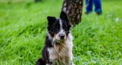 Las historias más emocionantes de perros salvando la vida a sus dueños en situaciones peligrosas