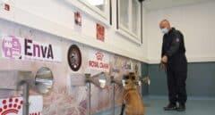 ¿Pueden los perros detectar con el olfato a personas con Covid?