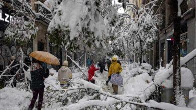 Más de 150.000 árboles podrían estar afectados por el temporal
