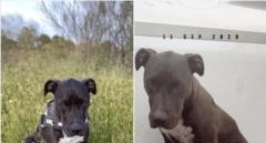 Las redes se vuelcan para encontrar a Brutus, un perro desaparecido tras la explosión
