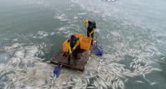 El 'Niño nuclear': cómo el conflicto atómico afectaría a los mares y recursos pesqueros