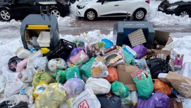 Plagas de ratas o cucarachas en las basuras: el aviso de las empresas de sanidad ambiental