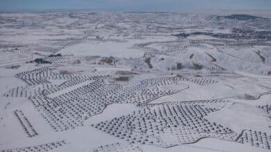 Greenpeace fotografía el efecto de 'Filomena' sobre la España rural desde el aire