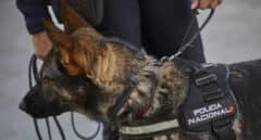 Hallan el cuerpo sin vida de una mujer devorado parcialmente por un perro