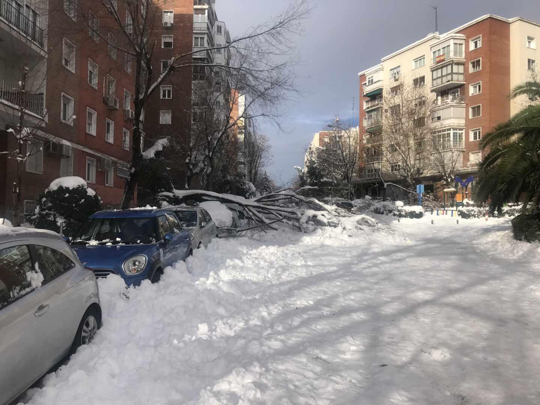 Árboles caídos en una calle de Madrid.