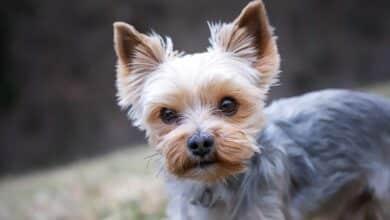 Piden 16 meses de cárcel a un acusado de matar a su perro y prenderle fuego por ladrar