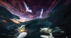 Fotografía submarina: las mejores imágenes de 2021