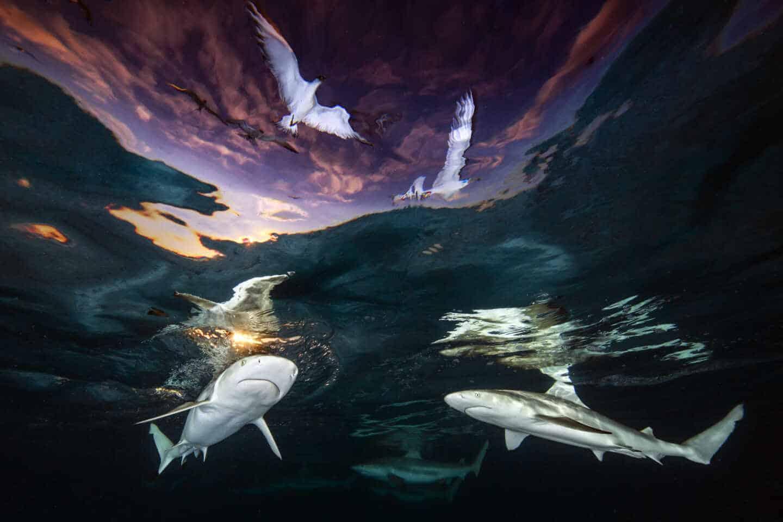 Fotografía Sharks' Skylight de Renee Capozzola
