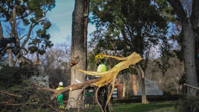 Un operario realiza trabajos de supervisión de árboles en El Retiro, en Madrid