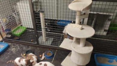 El laboratorio que vigila el papel de perros y gatos en el Covid