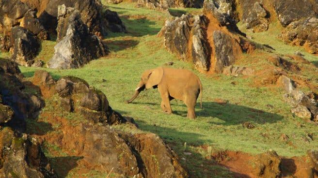 Un elefante en el Parque de Cabárceno