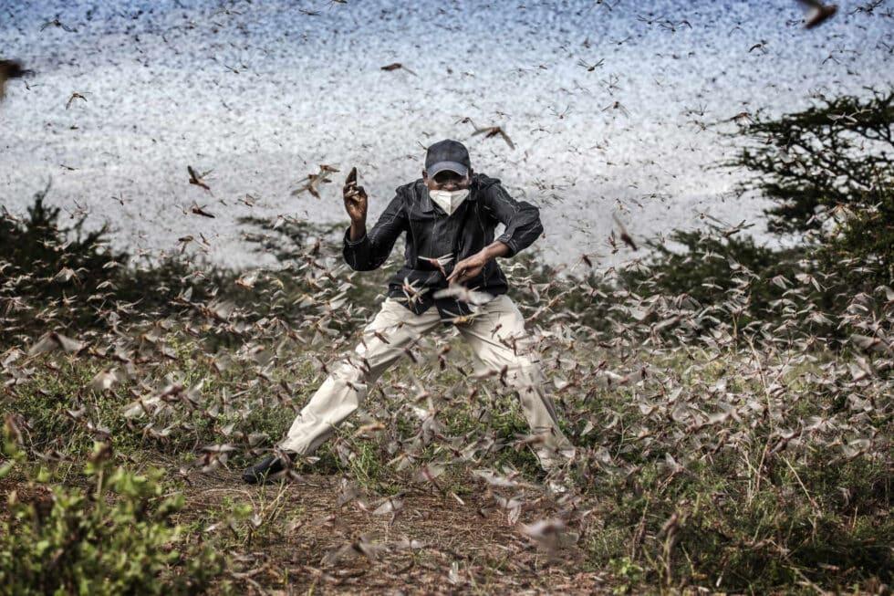 """Un hombre intenta ahuyentar a un enjambre masivo de langostas que asola un área cercana a Archers Post, condado de Samburu, Kenia el 24 de abril de 2020. La langosta hizo una aparición devastadora en Kenia. La pandemia de Covid-19 retrasó la llegada de insecticidas y pesticidas. La Organización de las Naciones Unidas para la Agricultura y la Alimentación (FAO) ha calificado el brote de langosta, causado en parte por el cambio climático, como """"una amenaza sin precedentes"""" para la seguridad alimentaria y los medios de vida."""