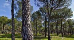 Correos contribuye a la reforestación con su Línea Bosques