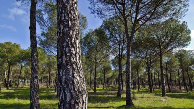 Correos contribuye a la reforestación con su Línea Bosques de sobres y embalajes