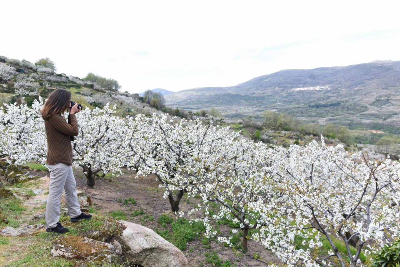 Una mujer fotografía los cerezos durante su floración en una de las sierras del Valle del Jerte, en Extremadura.
