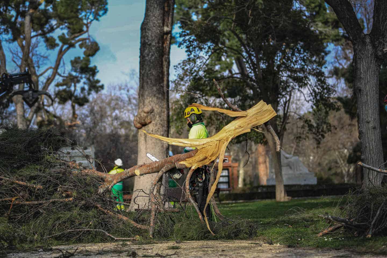 Un operario retirando una rama seca tras el Temporal de Simonena