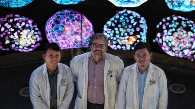 Los científicos que han conseguido crear el primer modelo de embrión humano a partir de células de la piel.