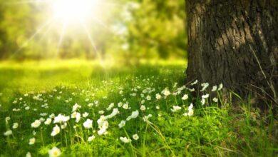 ¿Cuándo empieza la primavera y cuándo acaba el invierno?