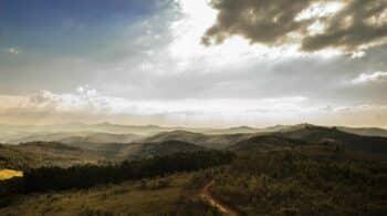 Bosque Endesa, reforestar terrenos incendiados