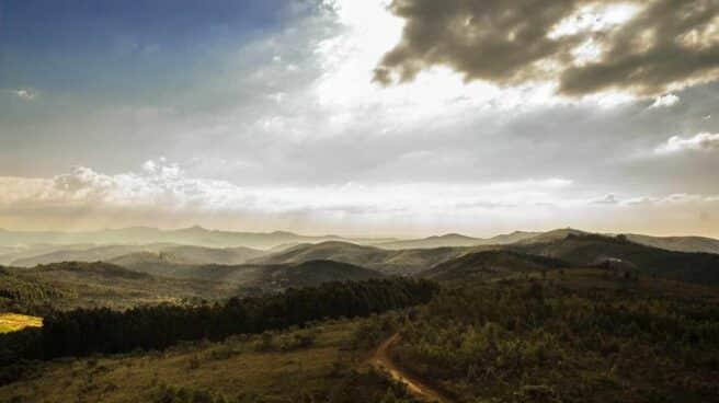 Vistas de un bosque con montaña