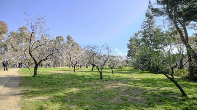 El parque de la Quinta de los Molinos de Madrid.