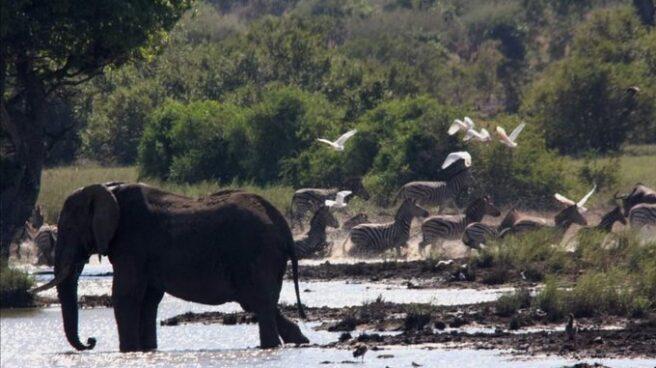 Un elefante en el Parque Kruger.