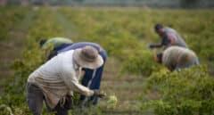La Audiencia Nacional investiga a cuatro bodegas de Valdepeñas por presunta estafa en la venta de vino