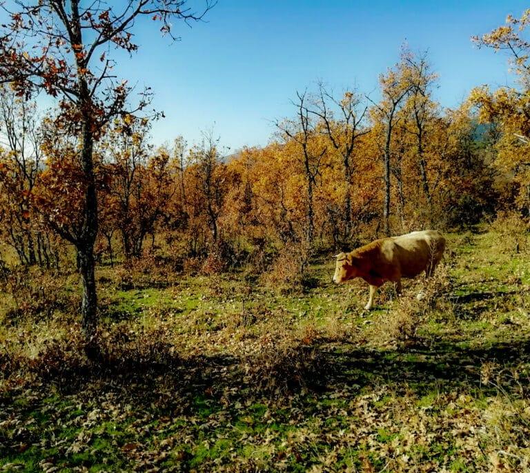 Las seis rutas que recomiendan los Agentes Forestales de la Comunidad de Madrid