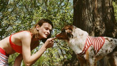 Zara lanza una nueva colección para perros