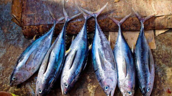 Fresco o en conserva, aún comemos poco atún