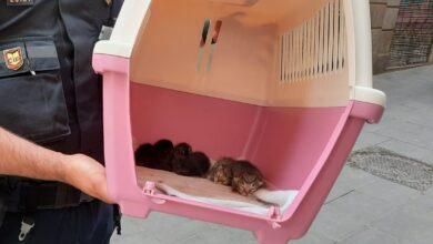 Intervenidos 37 gatos y un conejo en el piso de un hombre en Barcelona con síndrome de Noé