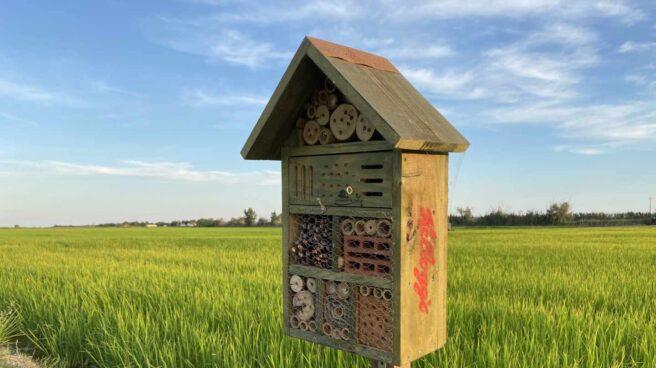 La biodiversidad fomentada por Kellogs en los campos de arroz del Delta del Ebro