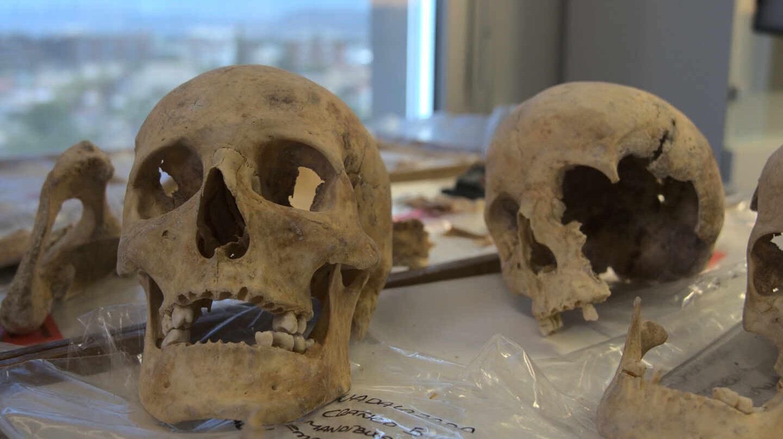 Restos exhumados de la tumba de Colón.