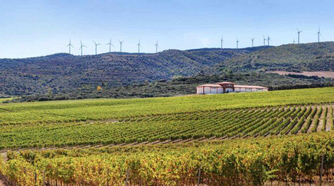 Blanco y en barrica: la revolución del vino de Rioja