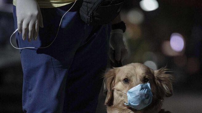 Un perro con mascarilla en Líbano durante la pandemia de Covid.