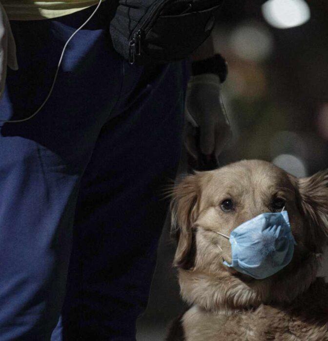Rusia empieza a vacunar animales frente al coronavirus: ¿Debería seguirle España?