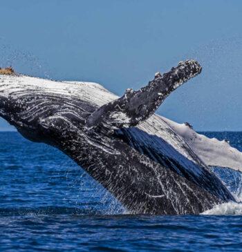 Se busca tratado global para salvar a los océanos