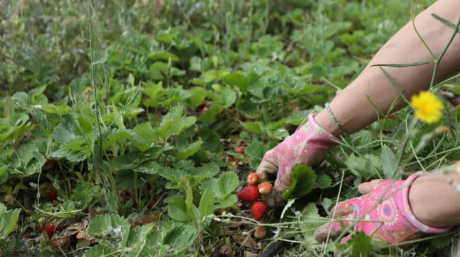 La reforma de los contratos temporales golpeará sobre todo a la agricultura, pesca y construcción