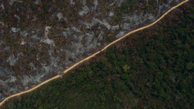 Ecocidio, el atentado contra la naturaleza que busca convertirse en crimen universal