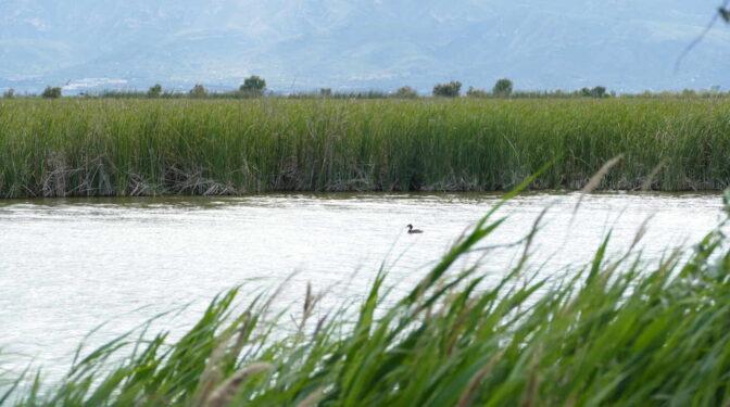 Objetivo para la próxima década: preservar los ecosistemas
