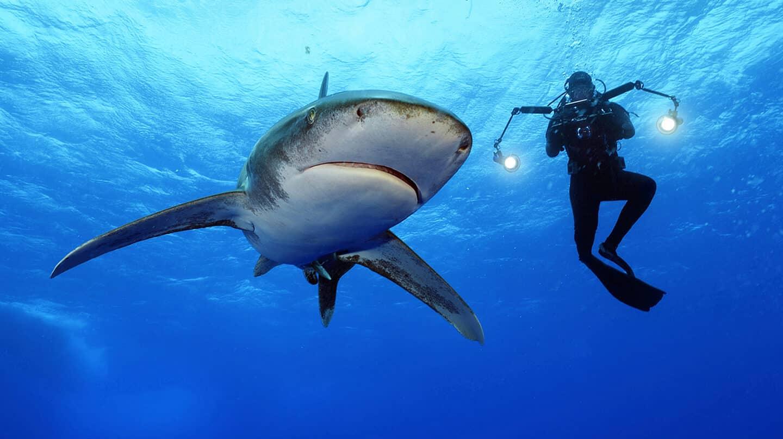 Brian Skerry nadando junto a un tiburón oceánico de puntas blancas