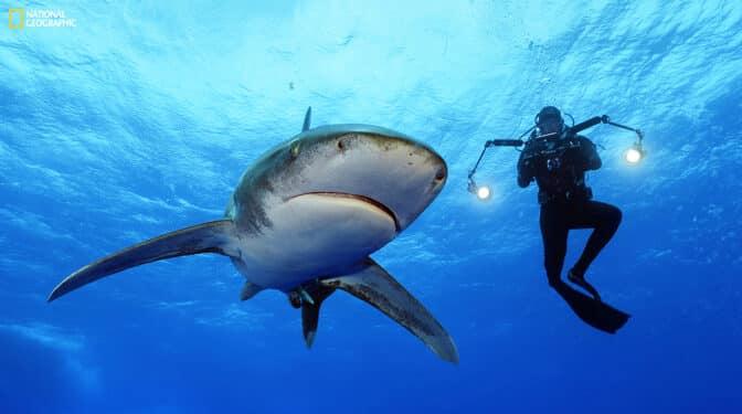 """""""Sharks"""" la exposición para adentrarse en el mundo de los tiburones de Brian Skerry"""