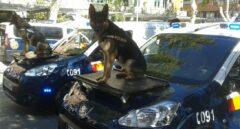 Los perros-policía detectan un millón de euros en el maletero de un coche en un control rutinario