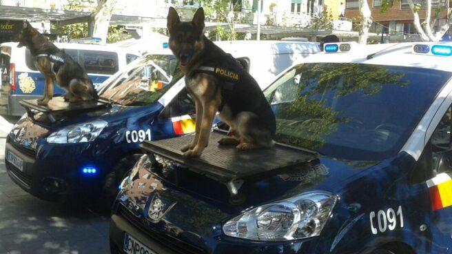 Perros adiestrados por la Policía Nacional.