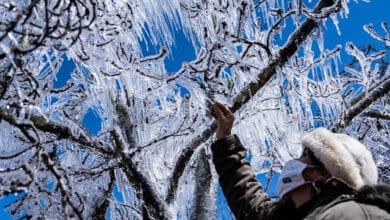 El sur de Brasil se tiñe de blanco por una nevada histórica